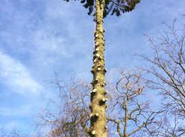 Tree Surgery, Hedge Work, Stump Grinding, Grounds & Garden Maintenance