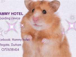 Hammy Hotel