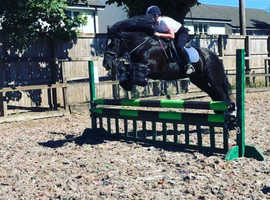 Looking for part loan near Glasgow area willing to travel a little for right horse/pony would like a horse who can jump but would be always jumping li