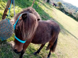 Two childrens ponys for sale