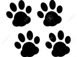 4pawsmania dog walking and pet sitting service Rotherham