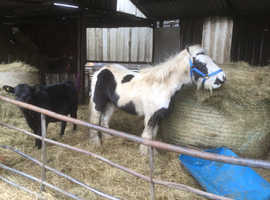 One Colt and one gelding for sale