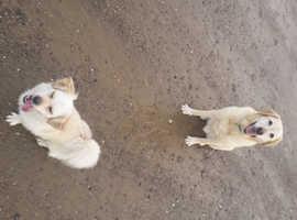 Angela's Walkies Dog Walking and Pet Sitting