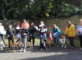 "The Happy Dog Training Academy ""Pet Training Course"""