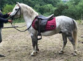 *beautiful unicorn pony*