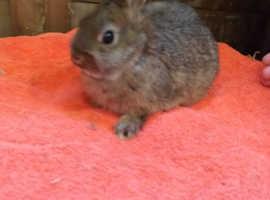 Purebred bunnies