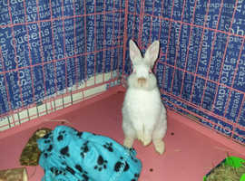 Female rabbit needing a new home