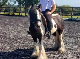 Super safe all-rounder pony
