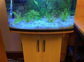 Aquarium / Fish tank 64L, curved panoramic glass with stand and accessories - great condition