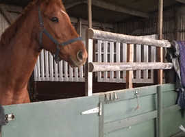 Ptp French thoroughbred