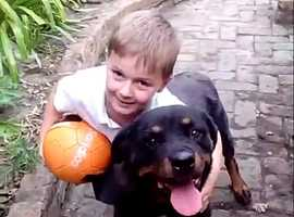 Dog wanted as my 11 year old Rottweiler passed away