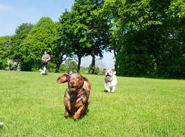 The best dog walkers in the area with amazing and the most Google reviews