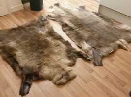 2x Reindeer Hide Rugs