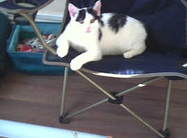 5 mth old cat for sale