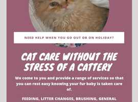 Cat care without the stress of a cattery
