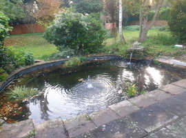 Pond fish wanted