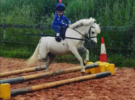 11h Leadrein/First ridden pony