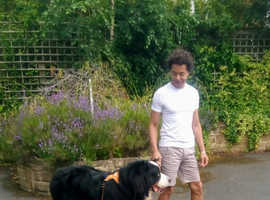 Energetic dog? Not enough outdoor time for your best friend?  I can help with a 30 minute walk for £10.