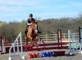 Kpwn gelding 10  years old