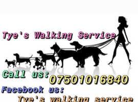 Tye's dog walking Service