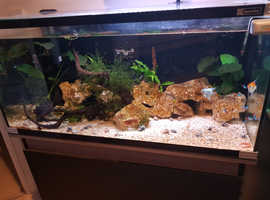 Various tropical fish and live plants