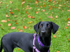 Black beauty Delta is for adoption