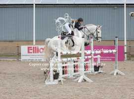Jc pony for sale