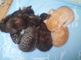 3 cute kittens