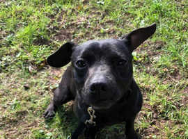 Girl Patterdale she's 3 year old