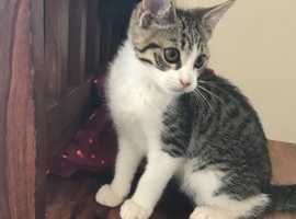 Gorgeous 4 month kitten for sale