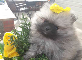 Puppy in Canvey Island | Dogs & Puppies For Sale & Rehome
