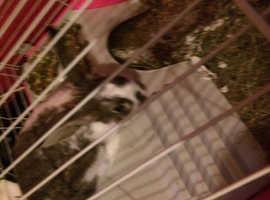 Loving girl rabbit