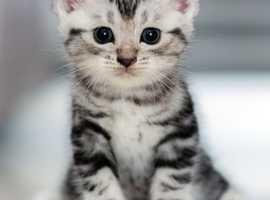 Looking for Kitten