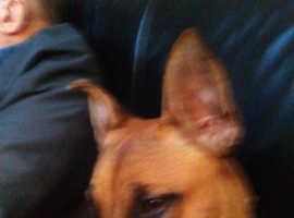 Lovely dog for sale