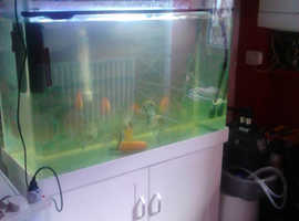aquarium fish tank full set up