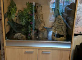 Complete Vivarium Set up and 6 African Green Tree Frogs