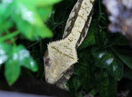 Reptile and Invert Rescue