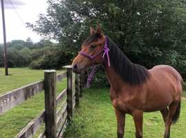 Stunning yearling mare prospect