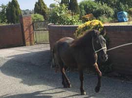 Beautiful black colt