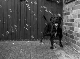 Dog Walking Services in Skegness