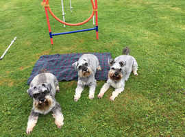 Puppies and Juniors 1 DAY WORKSHOP. AUGUST 23 rd. With qualified dog psychologist and behaviourist