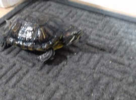 3 turtles need rehome