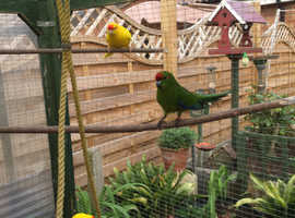Other Birds For Sale & Rehome in Nottingham | Find Birds For