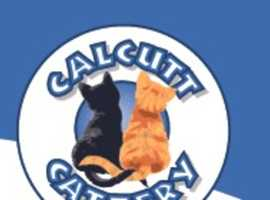 Looking for The Luxury Cattery in Warwickshire