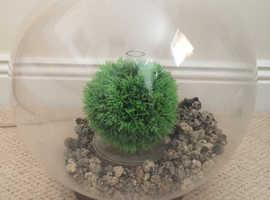 Baby BiOrb 15 litre fish tank