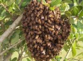 We collect bee swarm