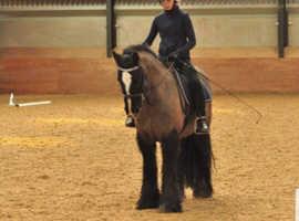 13.2 Super star pony