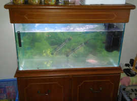 Guppies with tank £300 ono