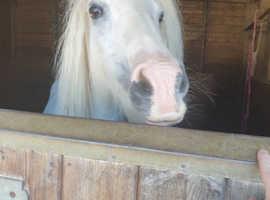 Stunning kids pony