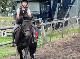 Sad sale  12,2 Dartmoor 13 years old gelding